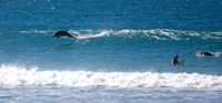 Dolphin Surfing at Crescent